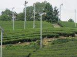 茶畑の扇風機